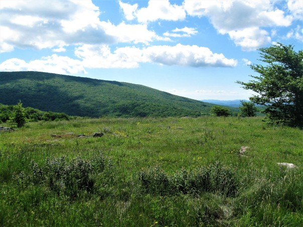 Appalachian Trail: Damascus to Burkes Garden Road (VA623) | flatfooting